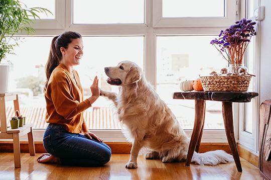 woman-dog-highfive-cd-mcti1